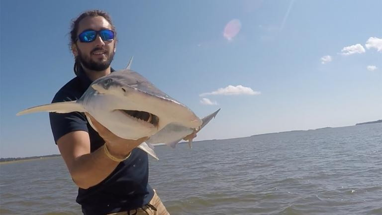 In this Sept. 2015 photo taken by Colby Griffiths on the North Edisto River in South Carolina, scientist Bryan Keller holds a bonnethead shark. (Photo courtesy Bryan Keller via AP)