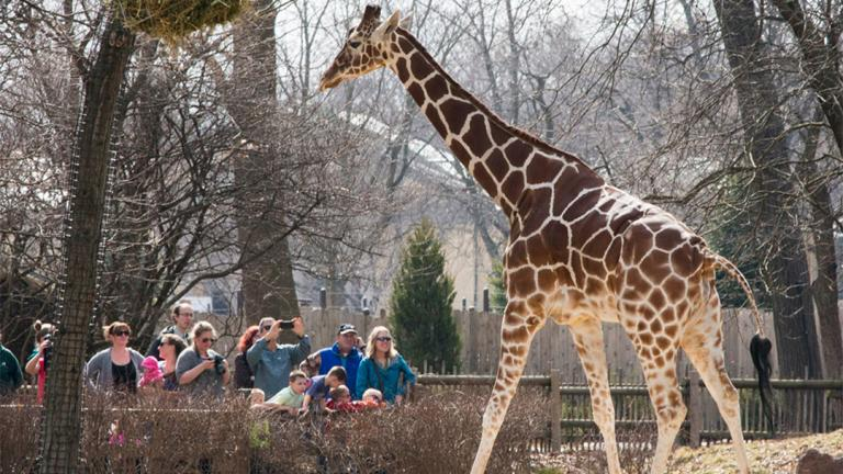 (Courtesy of Brookfield Zoo)