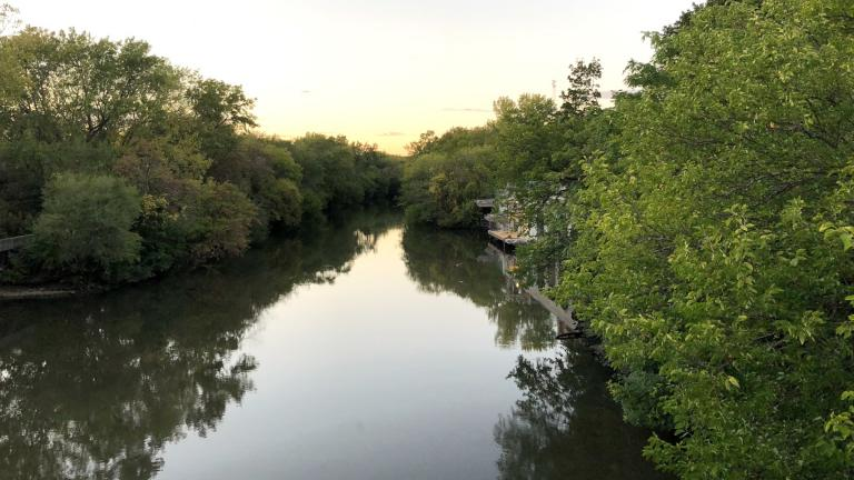 Green trees along the North Branch of the Chicago River, Oct. 14, 2021. (Patty Wetli / WTTW News)
