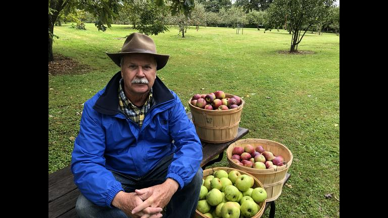 Al Westerman with three of the 124 apple varieties growing in his orchard. (Jay Shefsky / Chicago Tonight)