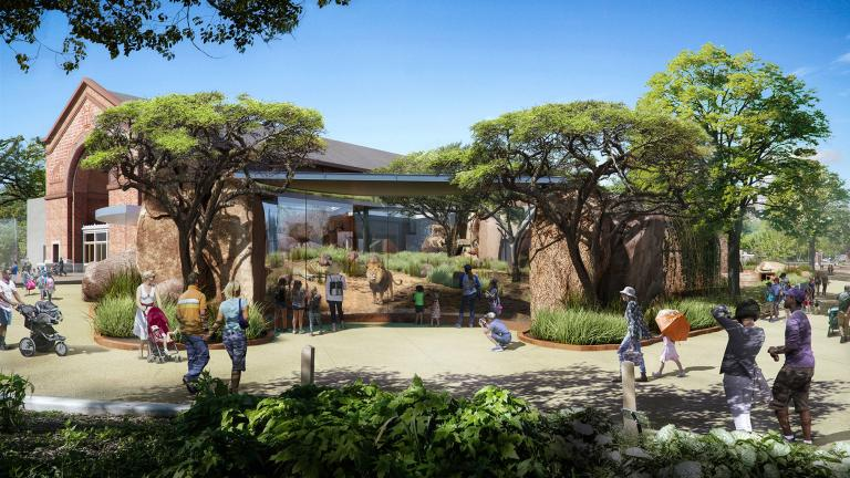A graphic rendering of the new Kovler Lion House planned for Lincoln Park Zoo (Courtesy Lincoln Park Zoo)
