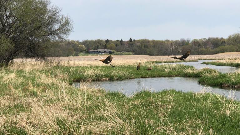 The Forest Preserve District of Cook County encompasses nearly 70,000 acres. (Patty Wetli / WTTW News)