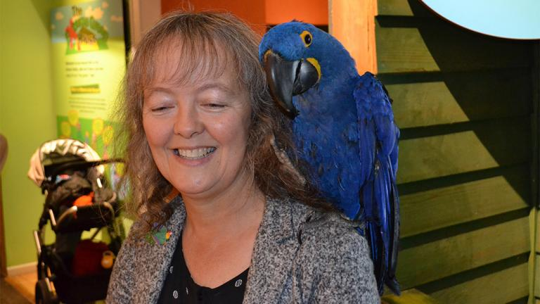 Noodle, an 18-year-old Hyacinth macaw, sits on the shoulder of Celeste Troon, director of living collections at the Peggy Notebaert Nature Museum. (Alex Ruppenthal / Chicago Tonight)