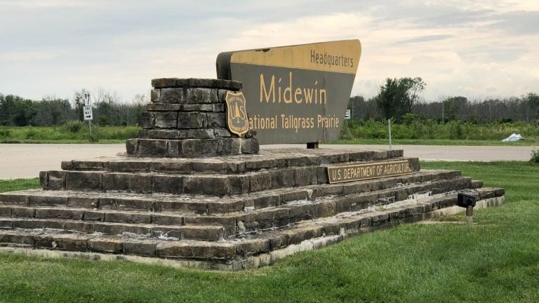 Midewin, the first national tallgrass prairie in the U.S., was established Feb. 10, 1996, celebrating its 25th anniversary. (Patty Wetli / WTTW News)