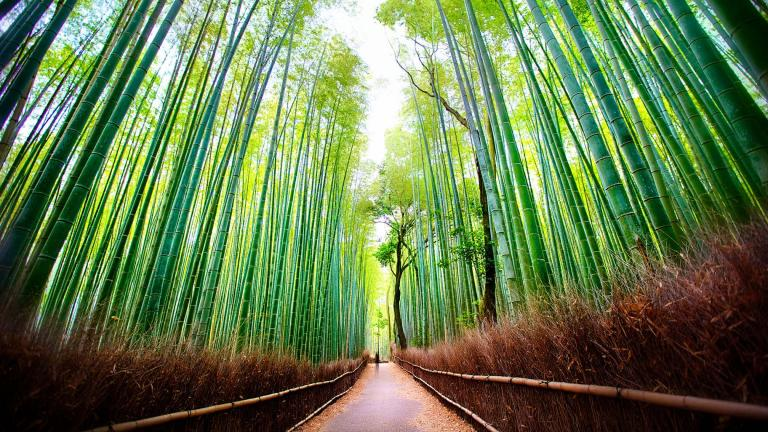 Arashiyama Bamboo Forest, Japan (Daniel Peckham / Flickr)