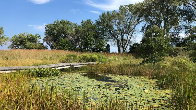 The South Shore Nature Sanctuary features 6 acres of dunes, wetlands, woodlands and prairies. (Alex Ruppenthal / WTTW News)