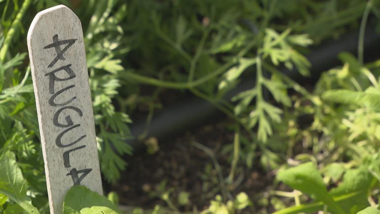 The WTTW organic garden.