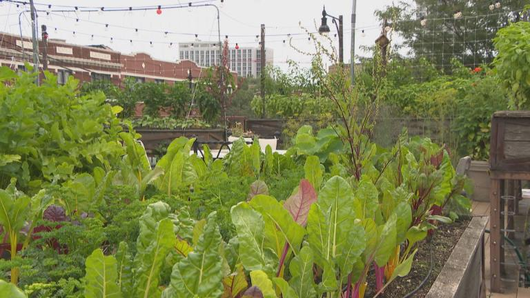 The rooftop garden at Uncommon Ground restaurant in Edgewater. (Chicago Tonight)