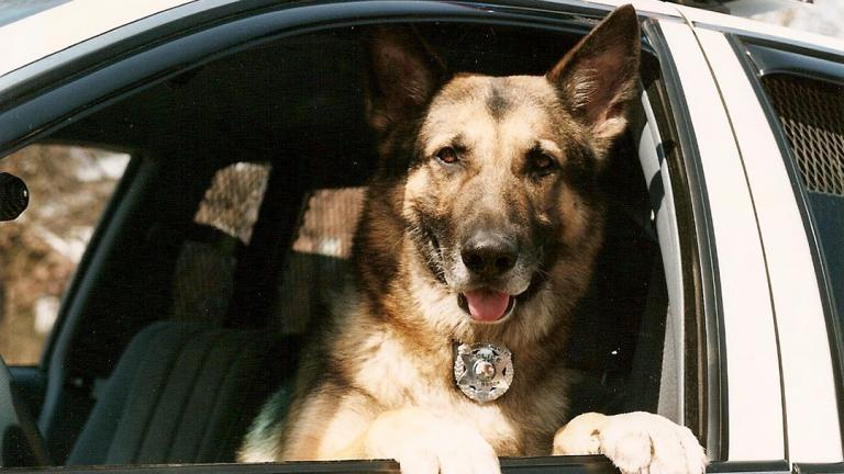K-9 Officer Marlo served with the Oak Brook Police Department from 1993-2000. (Randy Mucha)