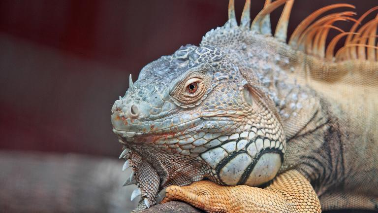 Scales in spades: See more than 200 species this weekend at ReptileFest. (Pexels / Pixabay)