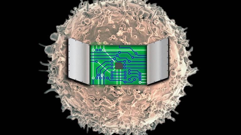 Northwestern University synthetic biologists have developed a technology for engineering customized immune cells to build programmable therapeutics. (Credit: Image by Joshua Leonard and Kelly Schwarz, Northwestern University. Cell image by NIAID/NIH via Flickr)