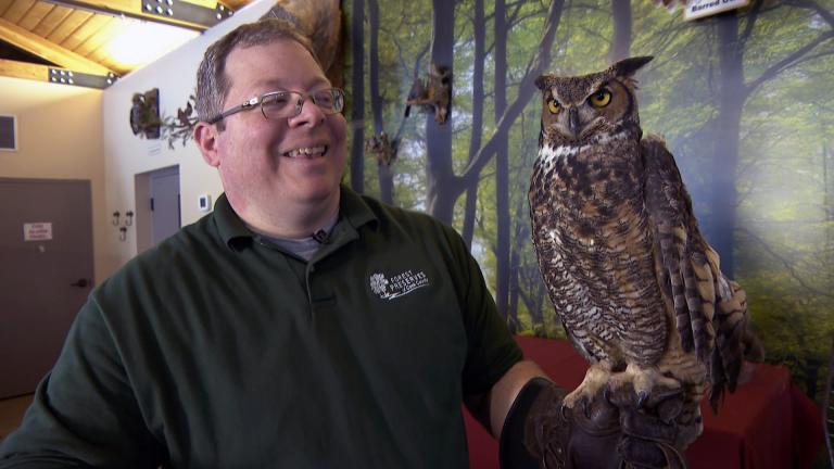 Cook County Forest Preserves naturalist Ryan DePauw holds a great horned owl, the largest owl found in the region, at the River Trail Nature Center on Feb. 18, 2021. (WTTW News)