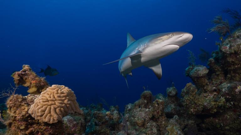 The Global FinPrint project is the first-ever worldwide survey of reef sharks. (Global FinPrint / Facebook)