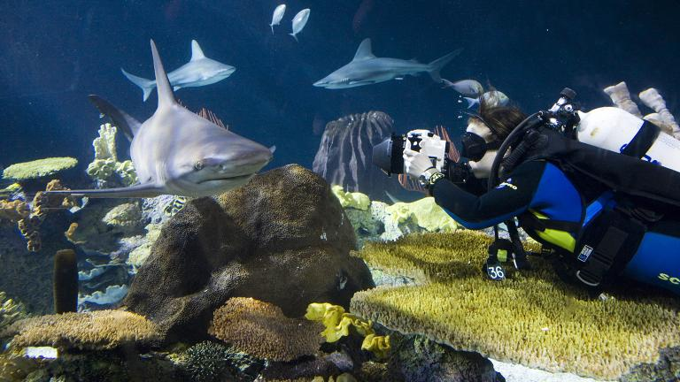 (Courtesy Shedd Aquarium)