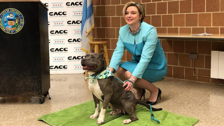 Chicago Animal Care and Control Executive Director Kelley Gandurski poses for a picture with Ashley, a 6-year-old stray dog available for adoption. (Alex Ruppenthal / WTTW)