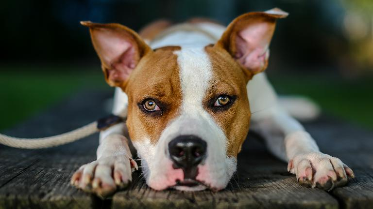 "A photograph of a shelter dog from our story, ""Photographer Donates His Talents to Help Dogs Get Adopted."" (Courtesy Josh Feeney)"