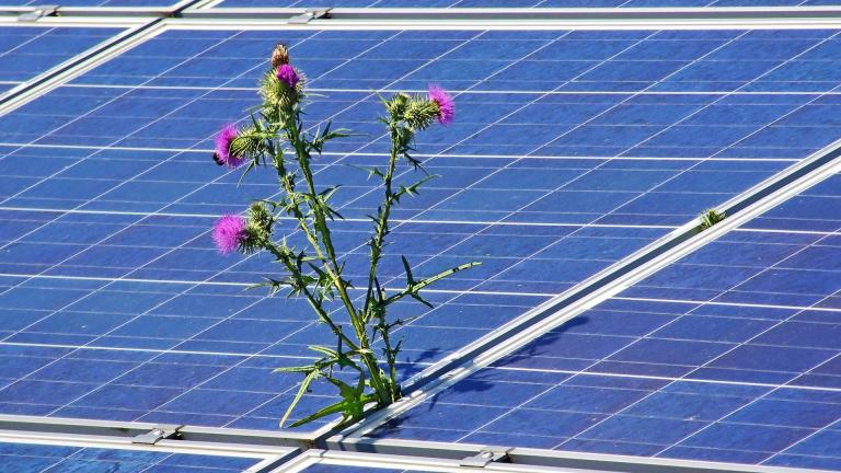 Interspersing native plants with solar panels can benefit pollinators. (Andreas Senftleben / Pixabay)