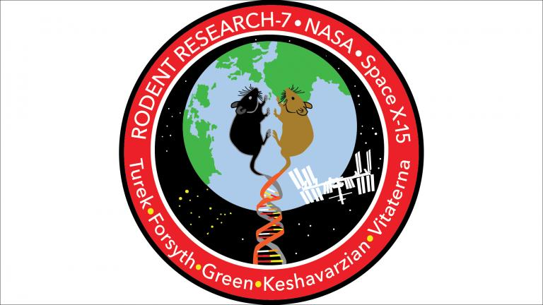 The patch designed by NASA for a Northwestern-led mission to study how space affects the physiology and metabolism of mice. (NASA / Northwestern University)