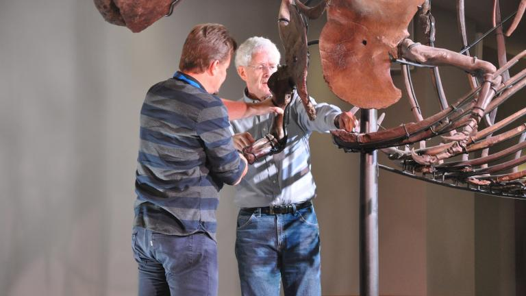 Field Museum scientists remove several bones from Sue the T. Rex on Tuesday, Feb. 19, 2019. (Eric Manabat / The Field Museum)