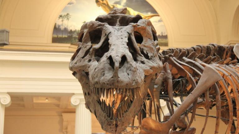 Sue the Tyrannosaurus Rex (John Mountjoy / Flickr)