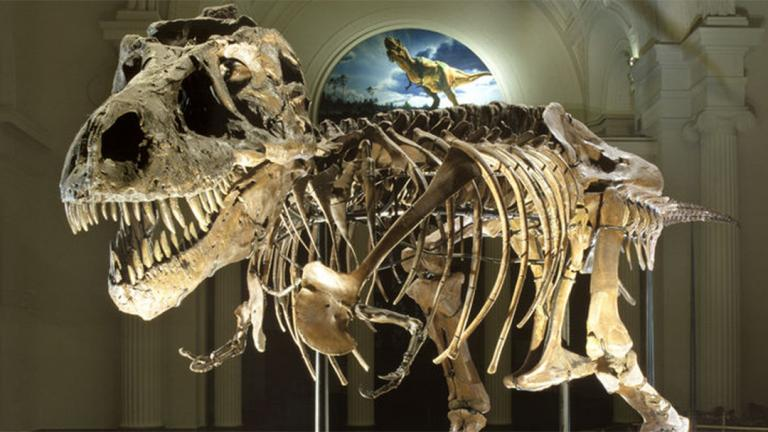 Sue the T. Rex (Courtesy The Field Museum)
