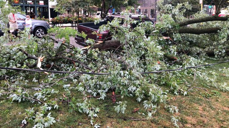 Nearly 12,000 trees were lost during the powerful Aug. 10 derecho storm. (Patty Wetli / WTTW News)