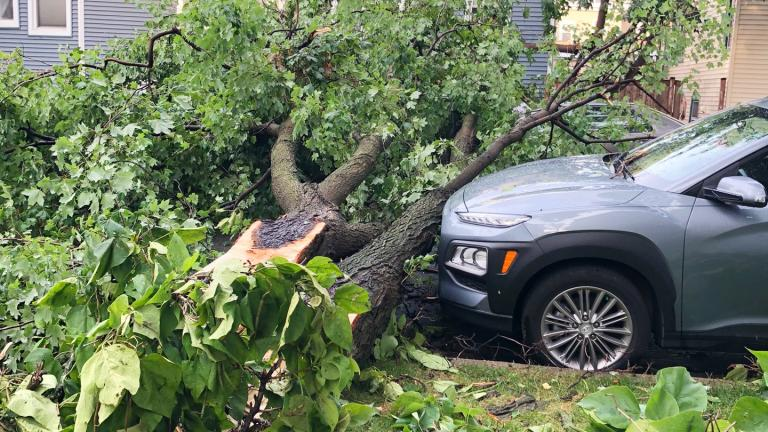 Trees crashed onto cars and into streets during storms on Aug. 10, 2020. (Patty Wetli / WTTW News)
