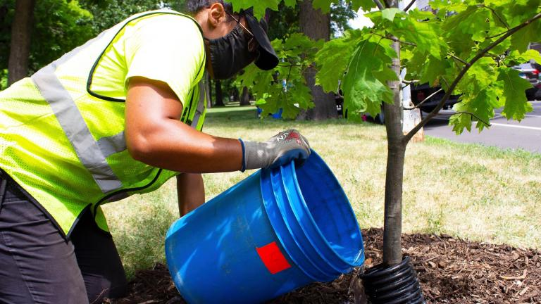 Chicago has room for 900,000 more trees in under-resourced areas alone. (Facebook / Openlands)