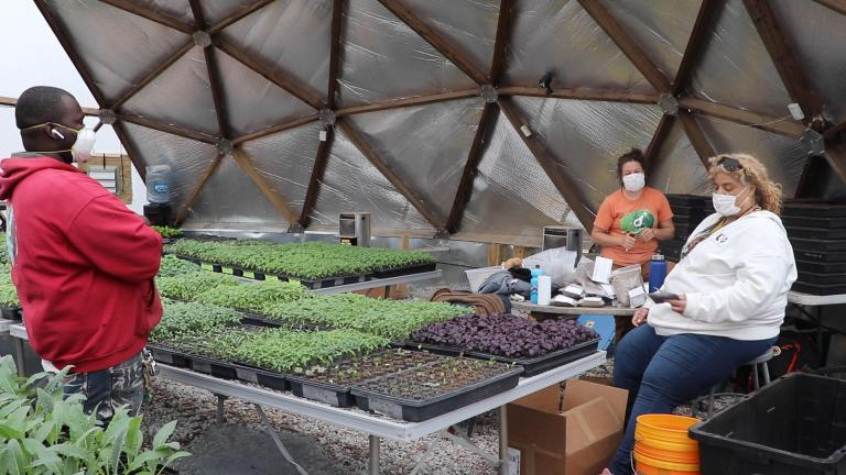 Urban Growers Collective co-founder Erika Allen, right, and staff sort through seeds inside the geodesic dome at the nonprofit's South Chicago farm. (Evan Garcia / WTTW News)