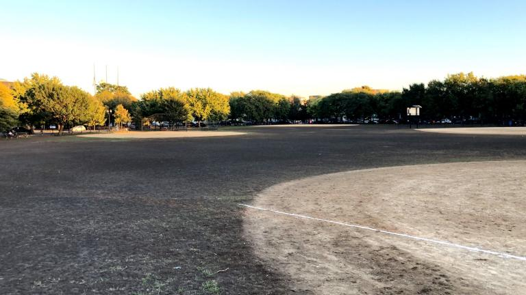 Grubs have laid waste to Welles Park, making it hard to tell where ball diamonds' infields end and outfields begin. (Patty Wetli / WTTW News)