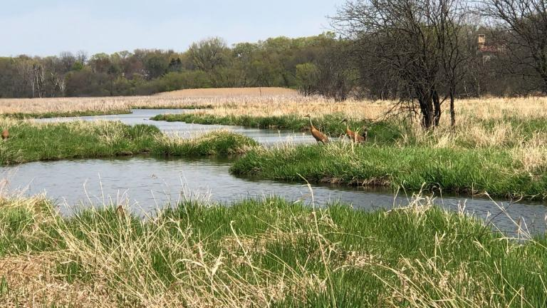 "A UIC professor has received a grant from NASA to search for ""legacy wetlands."" (Patty Wetli / WTTW News)"