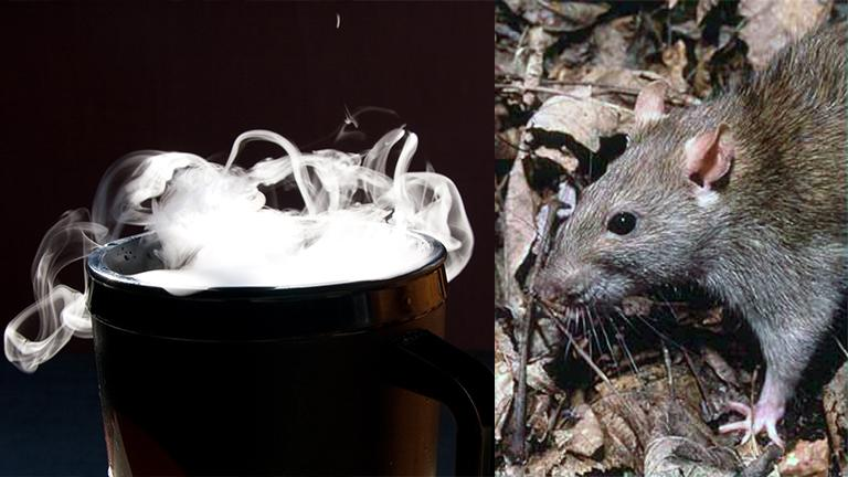 New York and Boston have also experimented with dry ice as a rodent control technique. (Dry ice: Shawn Henning / Rat: National Park Service)