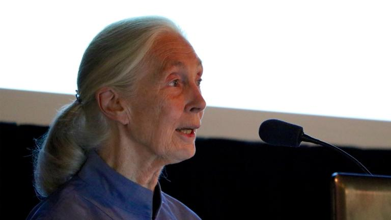 Jane Goodall speaks at the Lincoln Park Zoo on Thursday as part of the Chimpanzees in Context conference. (Evan Garcia / Chicago Tonight)