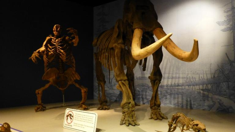 A mastodon fossil at the now closed Illinois State Museum (Flickr / Mike Linksvayer)