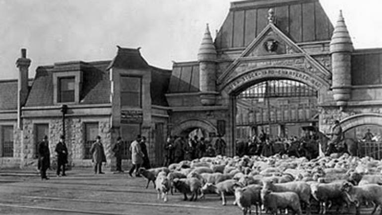 Chicago's Union Stockyards