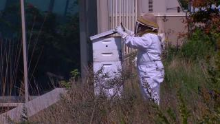 The Rise of Rooftop Bees