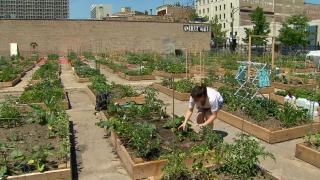 In Focus: Community Gardens