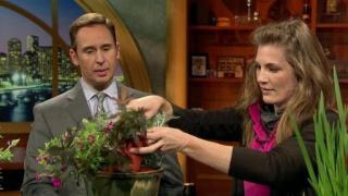 May 9, 2012 - Spring Gardening Tips