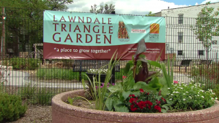 Community Garden Flourishes in North Lawndale