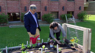 Tips for Terrific Tomatoes, from Soil Prep to Staking