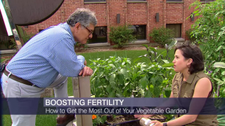 Summer Gardening: How to Maximize Your Crops