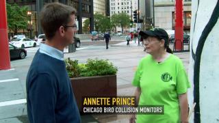 Urban Nature: 'Building a Bird-Safe City'