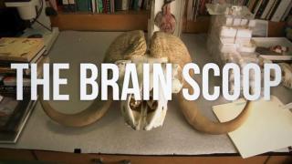 "July 25, 2013 - ""The Brain Scoop"""