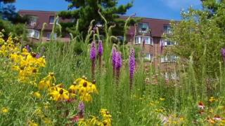August 27, 2013 - Native Plant Gardens