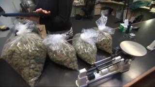 August 7, 2013 - Wicker Park Medical Marijuana Clinic Opens