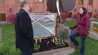 First Frost Signals Time to Put WTTW Garden to Bed
