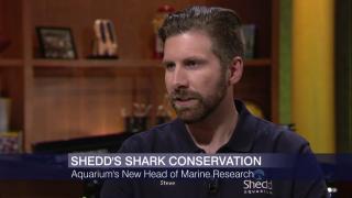 New Shedd Shark Expert on Aquarium's Conservation Efforts