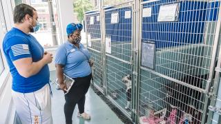 The Anti-Cruelty Society is participating in the national Clear the Shelters campaign and hosted a pair of events at the end of August. The agency is seeing an increase in the number of pets coming in after a drop-off in 2020. (Courtesy of The Anti-Cruelty Society)