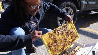 Beekeeper Thad Smith holds a frame of Italian honeybees in Cook County Jail's parking log. Smith is a former jail detainee who founded the company West Side Bee Boyz after taking part in a job-training program. (Evan Garcia / WTTW)