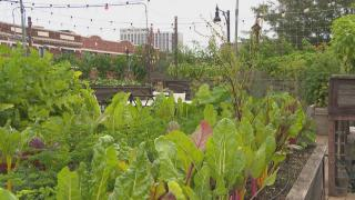 The rooftop garden at Uncommon Ground restaurant in Edgewater. (Chicago Tonight)